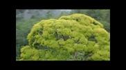 Планетата Земя - Видео