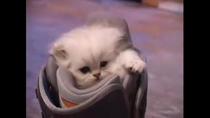 Най-сладкото котенце
