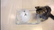 10 Сладки Котета се наслаждават на ледена топка .. :)
