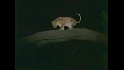 Лъвове И Хиени : Войната - 2 - Ра Част
