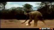 Супер смях: Животните разцъкват в саваната преди Юар 2010