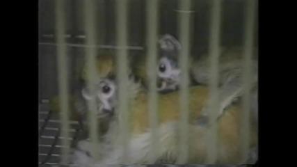 """""""и те искат да живеят..."""" Ето до какво води тестването върху животни!"""
