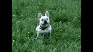 Сладко Кученце Се Смее След Като Го Нахранят