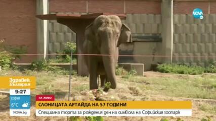 РОЖДЕН ДЕН В СОФИЙСКИЯ ЗООПАРК: Слоницата Артайда става на 57 години