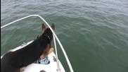 Куче скача върху делфини