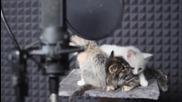 Малки сладки пеещи котенца :)