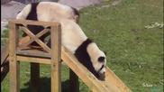 Сладки бебета панда ...