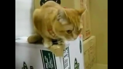 Anxious Cat Can't Wait for Food