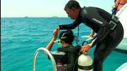 """Какво може да срещнеш в дълбините на Червено море (""""Без багаж"""" еп.27)"""