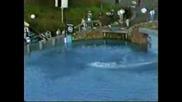 Световен Рекорд:мъж Скача От 52,  4256 метра В Водата