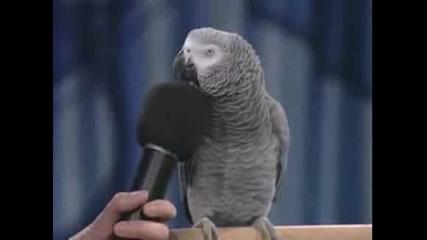Говорящ Папагал