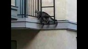 Котка Се Катери По Стена!!!!