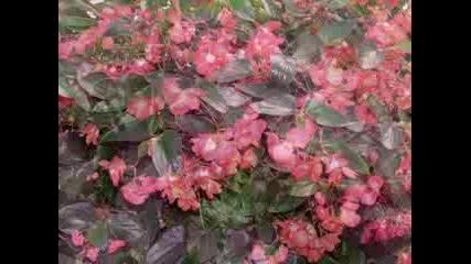 Цветя От Бабината Градина