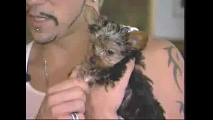 Aj Mclean From Bsb - Mtv Cribs