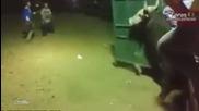 Този бик откри коридата преди да е започнала - смях