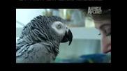 Говорящо папагалче по Animal Planet