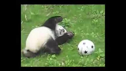 Бебе Панда Си Играе С Топка :)
