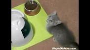 Коте моли за храна