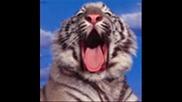Големи Котки
