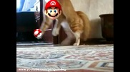 Коте изчезва с финес (new version) Thriller Cat