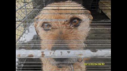 При изоставените... Приют Бургас - Може би там е Вашето куче