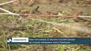 Ново попълнение 20 обучени плъхове-сапьори ще открива невзривени мини в Камбоджа