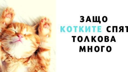 Защо котките спят толкова много