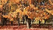 Yves Montand - Les Feuilles Mortes -
