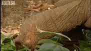 Tourists vs Conservationists - Bbc Environment