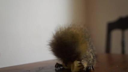 Малка маймунка яде макарони