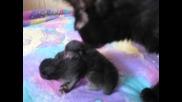 Новородени Котенца