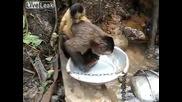 Маймунка мие съдовете след ядене