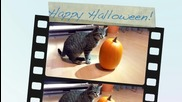 Lichtmond - Halloween greetings from Minou