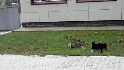 Куче Vs Котка - Кой ще победи?