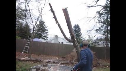 Човек си реже дърво в задния двор и изведнъж се случва чудо!