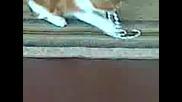 Двете сладки котета Нийка и Адриянка