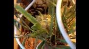 Гнездо На Амадини