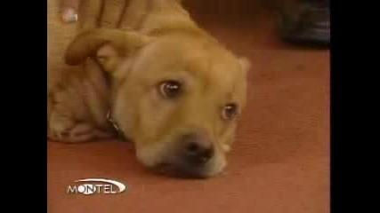 Най - Уникалното Куче В Света