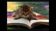 Чело коте книжки