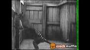 Тасманийски Торбест Вълк 1933 Година