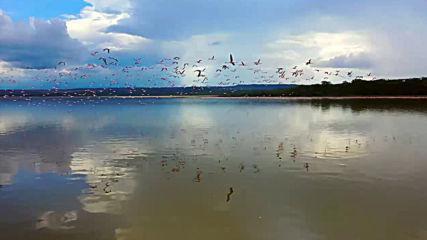 Кения еп.8_Езеро Елементайта, лоджа Сънбърд, фламинго (Без багаж еп.236 трейлър).