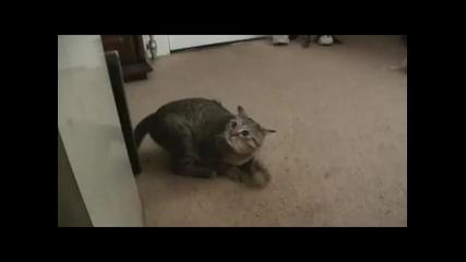 Котко има газове