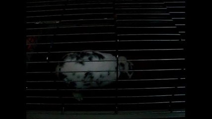 Мини заек унищожава плетена кощница