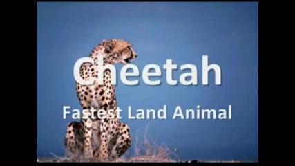 Топ 10 Най - бързи животни на Земята