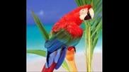 Paul Hardcastle - Bird Island