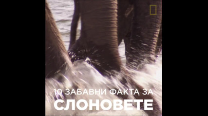 10 забавни факта за слоновете