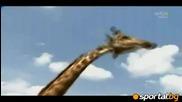 Животните разцъкват в саваната преди Юар 2010