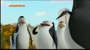 Пингвините От Мадагаскар Бг Аудио Цял Епизод 17.10.2014