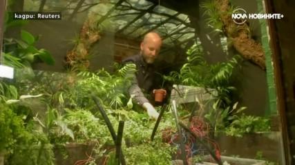 Растение си прави селфита и работилница за диаманти в Лондон