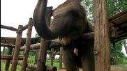 Без Багаж - Шри Ланка #2 - Приют за малки слончета